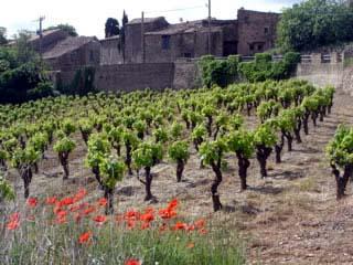 Les Vignes du Domaine de Babio
