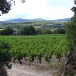 carignan-vignes_babio